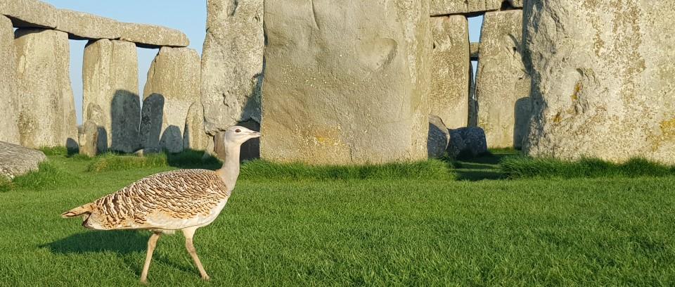 Stonehenge wildlife